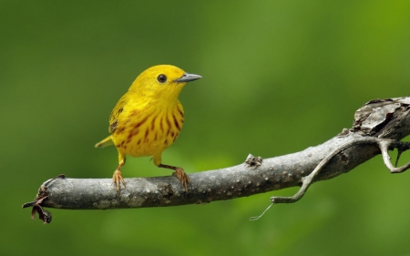 Bird - cute, vara, bird, green, pasare, summer, yellow
