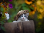 Blue-Eyed Kitten in a Hat