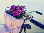 Flowers and Bike