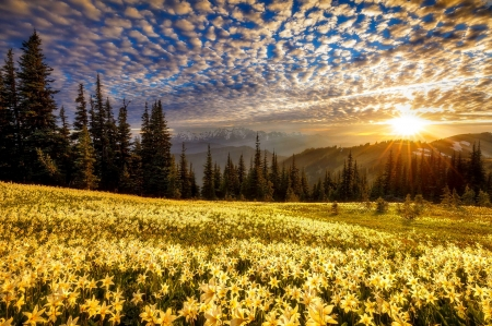 Olympic sun - glow, sun, beautiful, sunset, sky, clouds, olympic, mountain, rays, wildflowers, flowers, sunrise