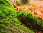 Green Moss and Autumn Leaves