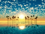 Fantastic Sunset Over Palm Trees