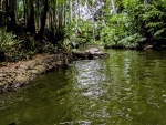 Overgrown Jungle River
