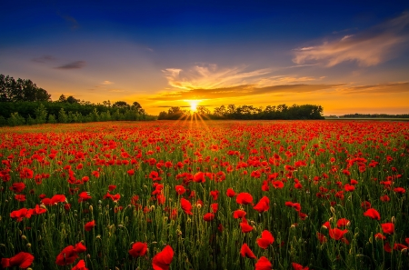 Sunset over poppy field - rays, poppies, summer, flowers, beautiful, sunset, sky, field