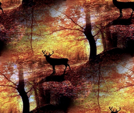 Buck Reflection - Deer & Animals Background Wallpapers on