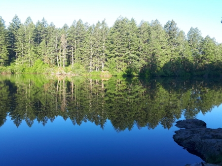 Peaceful Reflection - forest, reflection, lake, blue