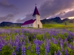 Church and Lupins