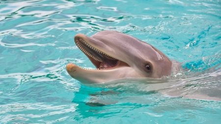 Happy Dolphin - dolphin, laughing, sea, happy