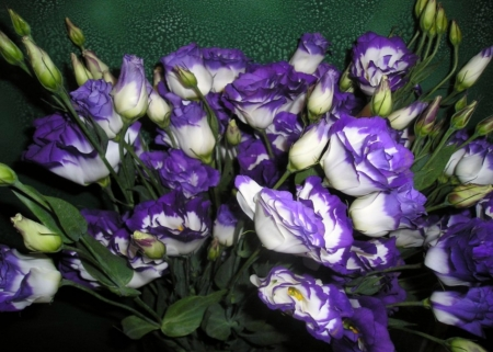Lisianthus flowers flowers nature background wallpapers on lisianthus flowers lisianthus flower white purple paper flowers thecheapjerseys Choice Image