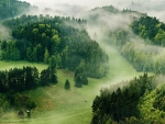 The Misty Green Forests