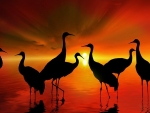 Cranes Wading in The Sunset