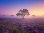 Lone Tree in a Field of Flowers