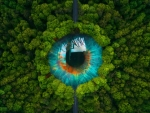 Eye of nature