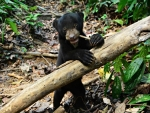Orphaned Black Bear Finds New Home