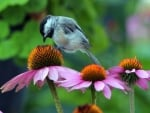 Flower With Chickadee