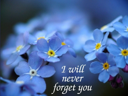 I Will Never Forget You Flowers Nature Background Wallpapers On