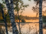 Birches by River in Latvia