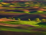 Palouse Hills-Washington