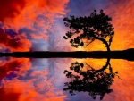 Reflecting Lonely Tree
