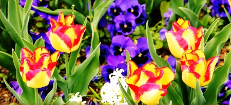 Spring Floral - red, yellow, spring, floral, purple, green, flower, summer, tulip