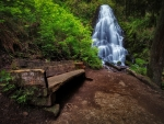 Bench near forest waterfall