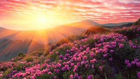 Sunset is a Mountain with Pink Rhododendron - mountains, rhododendron, flowers, nature, sunset, sky, pink
