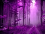 Path in Purple Forest