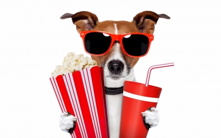 Ready For The Movie - Drink, Funny, Dogs, Popcorn, Movie, Sunglasses, Animals