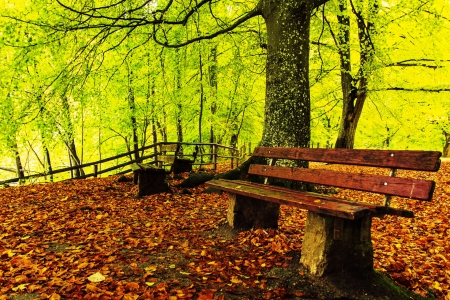 Forest Fall Leaves - forest, fall, tree, leaves, bench, branches, leaf