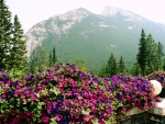 Nature Flower Mountain