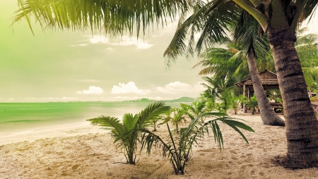 Tropical Beach - water, sky, sea, palms