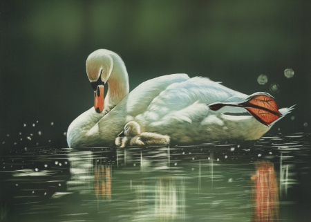 Swans - animal, bird, painting, swans