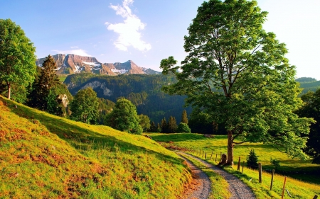 Summer in the Mountains - fence, path, trees, clouds, sky, meadow, landscape