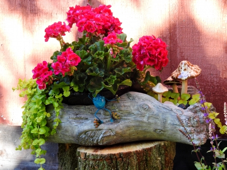 Spring Geraniums - Spring, Photography, Flowers, Nature, Geraniums, Planter