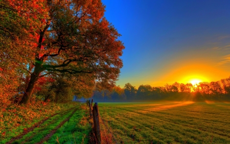 Autumn Sunset - Trees, Field, Sunlight, Meadow