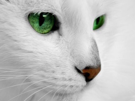 Frederika - White, Feline, Green eyes, Cat