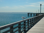 Pier with Seagull