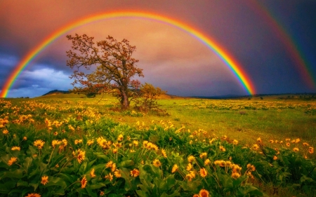 rainbow nature field desktop backgrounds hd wallpapers rainbows background spring landscape flower springtime daisy flowers trees sky tree yellow earth