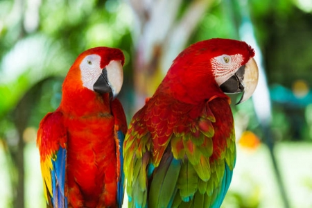 Parrots - Outdoor, Feathers, Parrots, Birds, Wild life