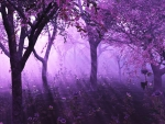 In the Purple Woods