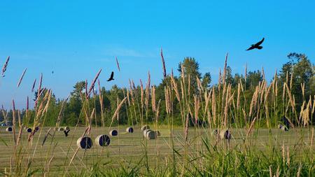 Wilder Ranch Hay Field - widescreen, country, field, hay, eagles, washington, farm, rural