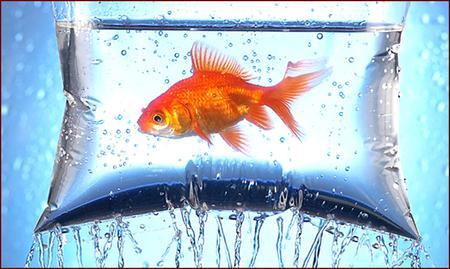 temporary aquarium - temporary, aquarium