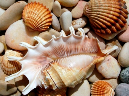 SHELLS - NATURE, ROCKS, SHELLS, IMAGE