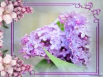 LOVELY FRAMED LILAC