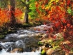 Creek in the Colorful Fall