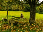 Peaceful Resting Bench