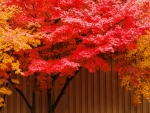 Red & Yellow Leaves Tree