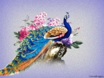 COLOURFUL PEACOCK