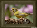 BIRD IN A FRAME