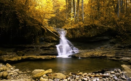 Forest Small Waterfall - waterfalls, pond, falls, yellow, forest, gold, lake